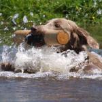 Jachthonden cursus